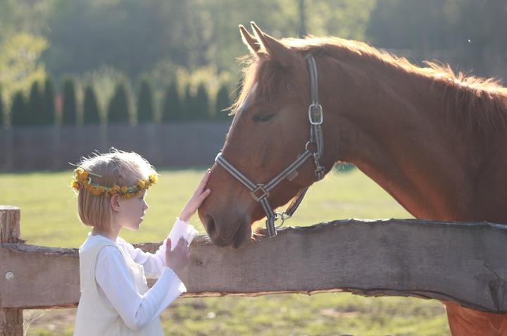 Pferd kaufen oder Reitbeteiligung?