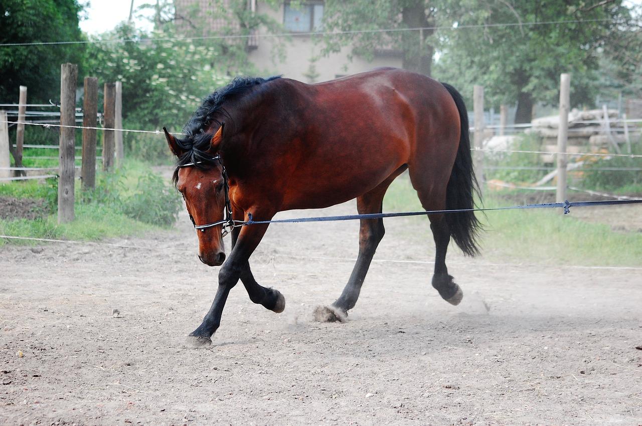 Was kostet ein Pferd an Unterhalt?