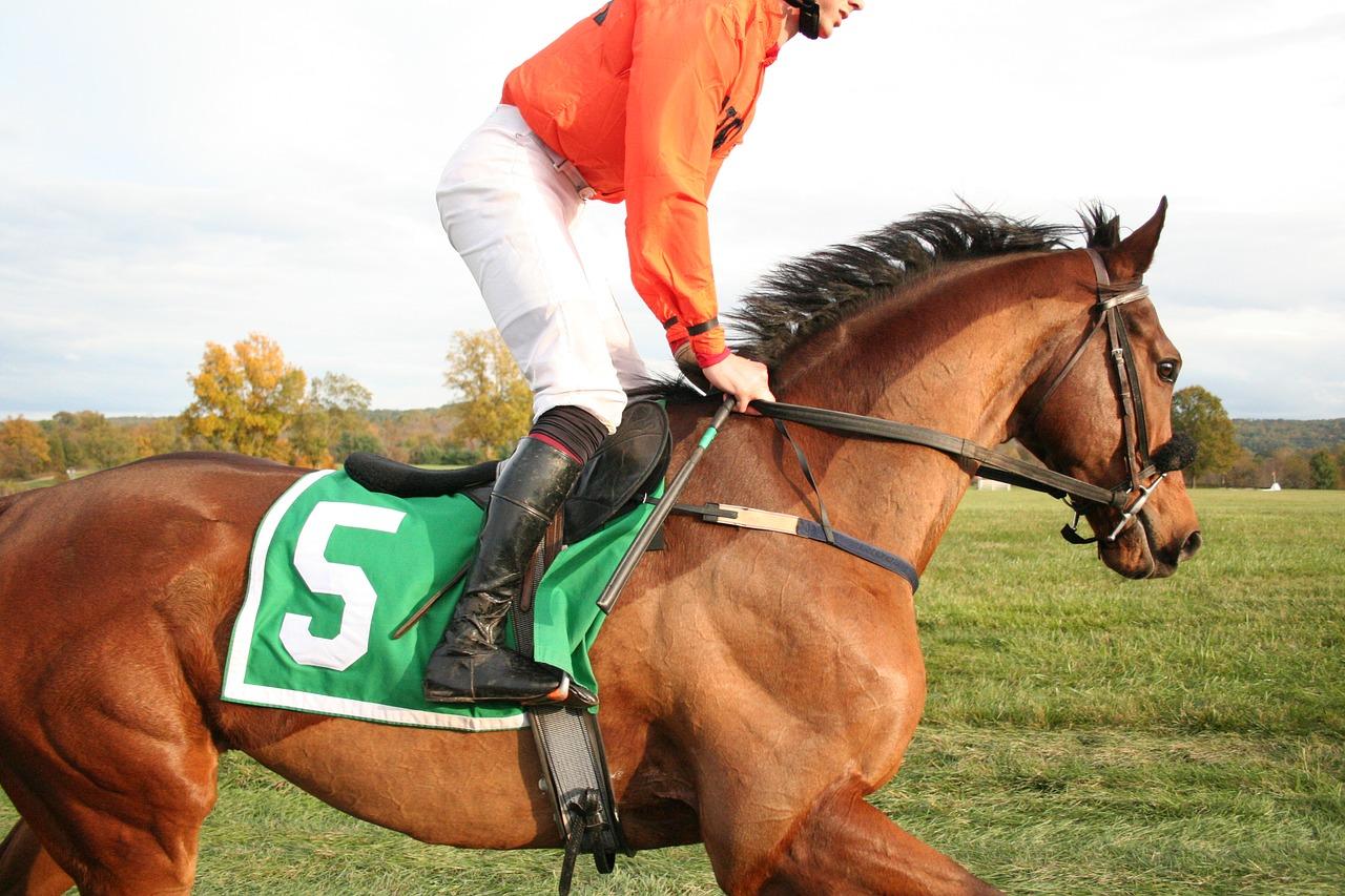 Rennpferde trainieren