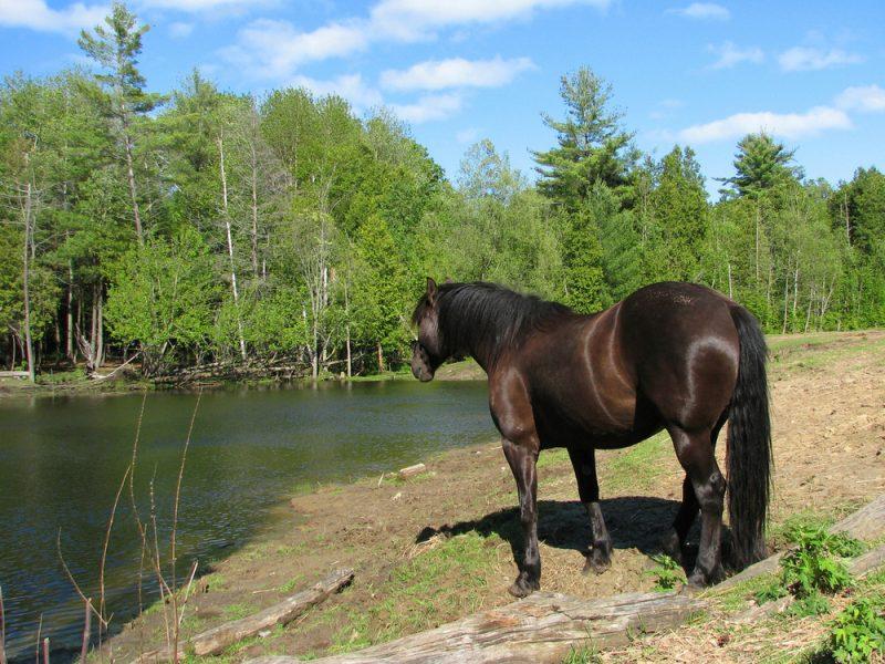Spaß muss sein: Pferdesport mal anders!